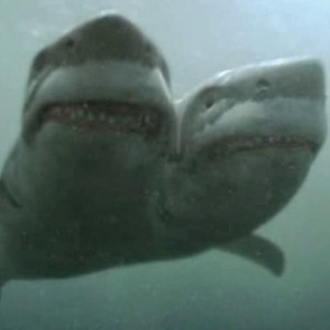 Things I Wasn     t Expecting When Dating As A Single Mom   The     Increased Sightings of Two Headed Sharks Baffle ScientistsAol com